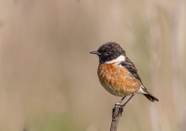 aves Doñana