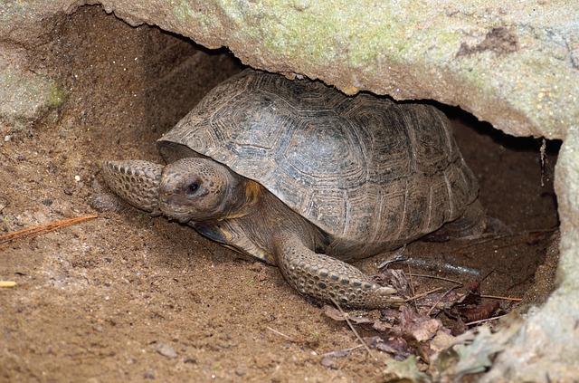 Reproducción de las tortugas