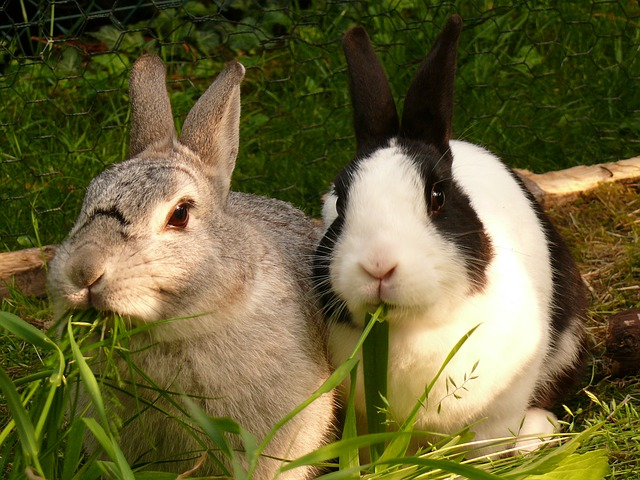 Hierbas que pueden comer los Conejos