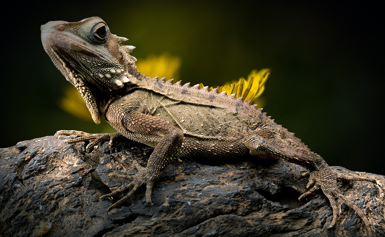 Iguana Reptiles