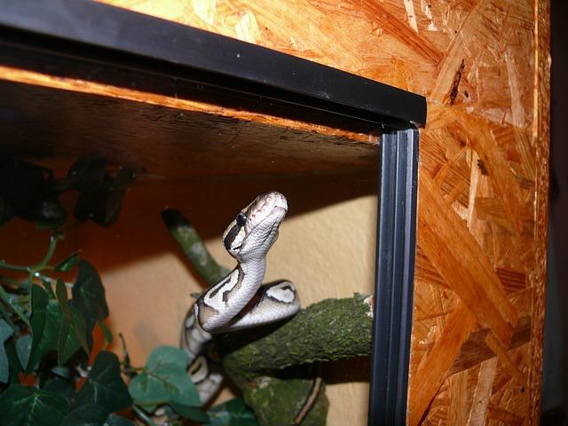 Terrario de Serpientes