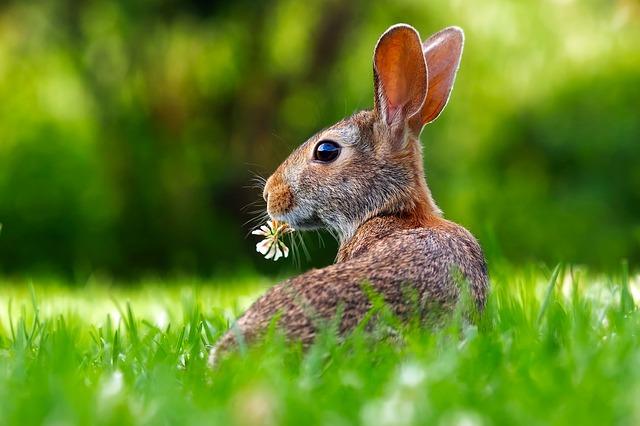 ¿Qué frutas y qué verduras pueden comer los Conejos?