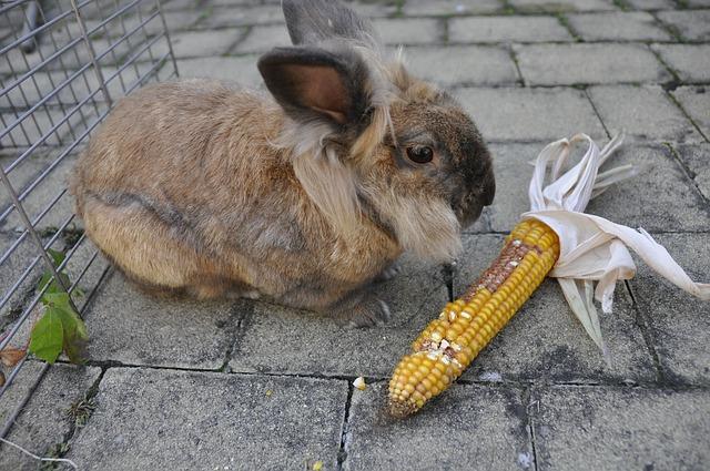 Verduras que no pueden comer los Conejos