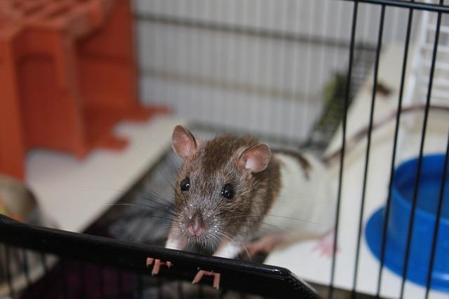 Jaula de Ratones