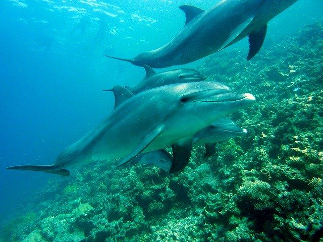 delfines canarias