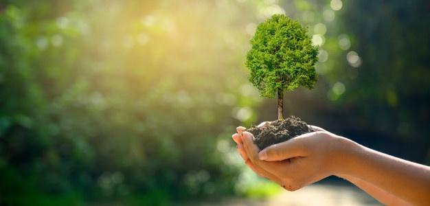 cuidados del medio ambiente, contaminación del medio ambiente, cuidamos el medio ambiente