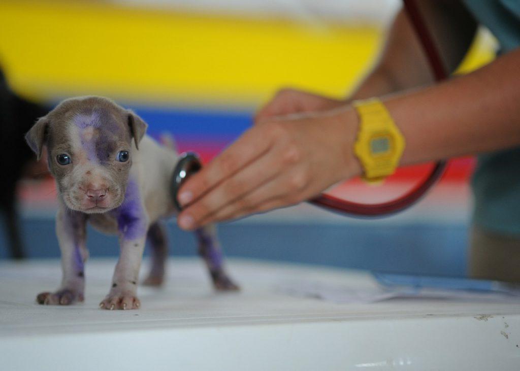 Veterinario-de-mascotas, veterinario-para-perros, calendario-de-vacunas-para-perros