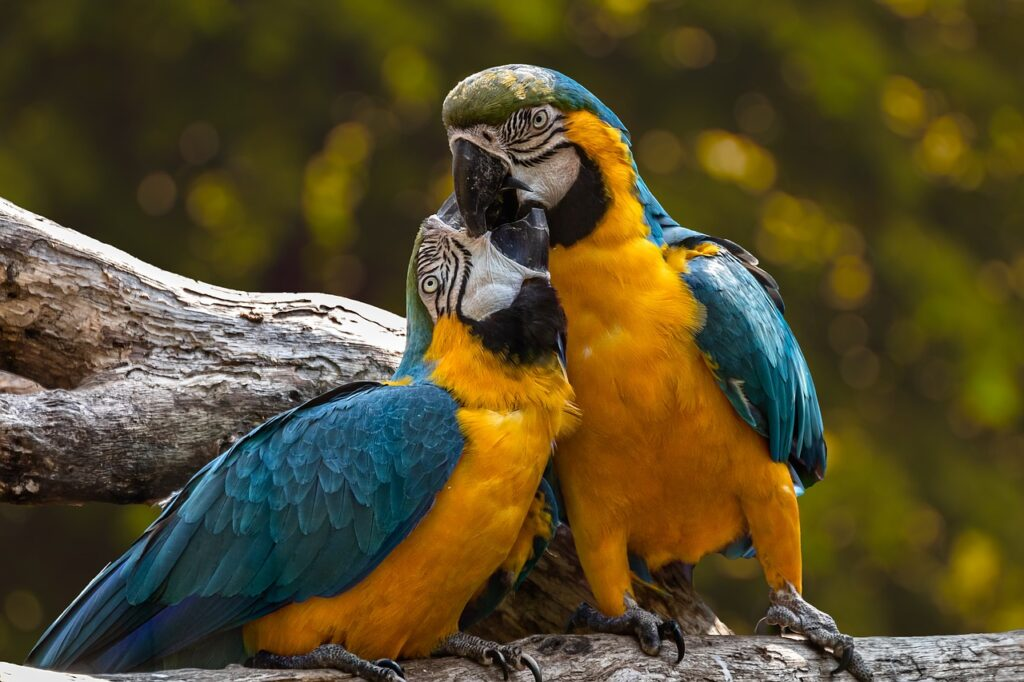 cuidados-que-necesitan-las-aves