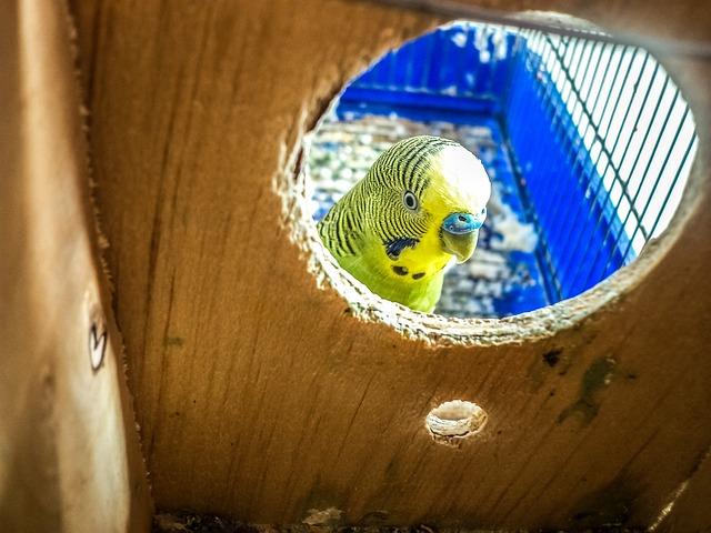 como-cuidar-un-pájaro, cuidados-de-las-aves