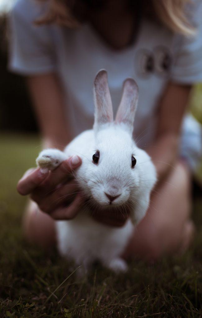 como-cuidar-un-conejo-doméstico