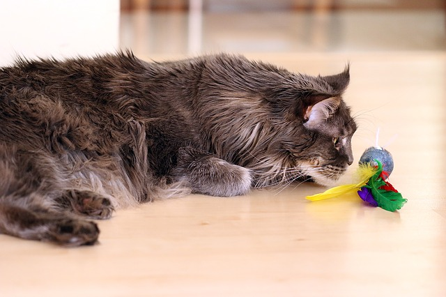 como-cuidar-de-un-gato