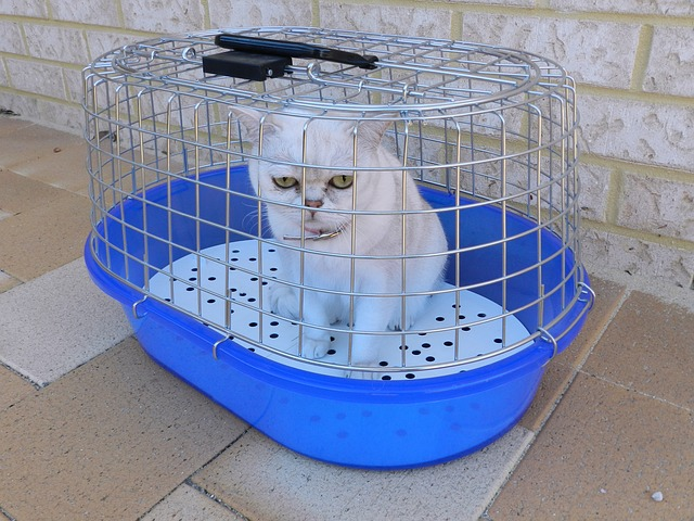 enfermedades-de-los-gatos-persas