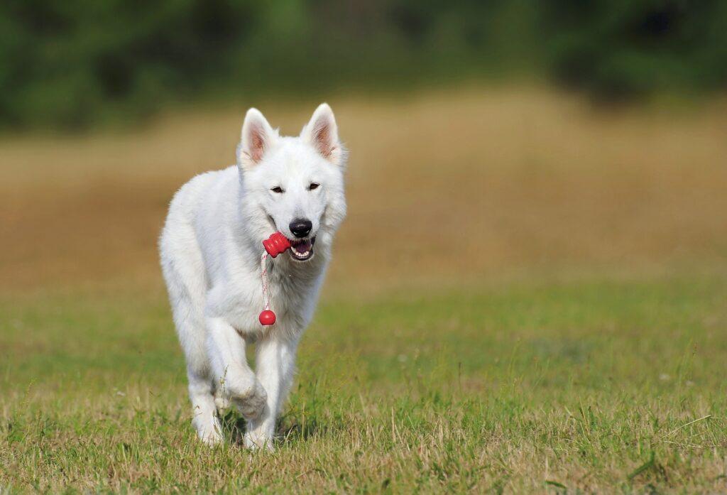Cuidados-de-un-perro, Como-cuidar un-perro