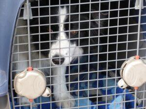 perro adiestrado en su jaula