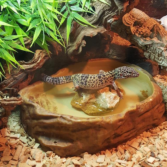 cuidados, alimentación higiene de los reptiles