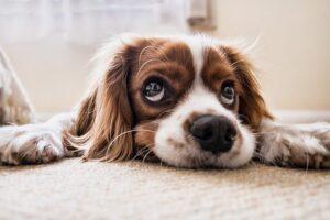 curiosidades de las mascotas