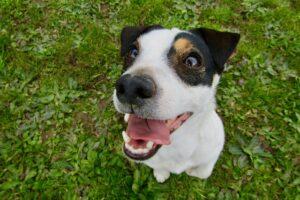 como cuidar los dientes de tu perro